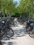 Bike parking. Two rows of parking bikes under trees Royalty Free Stock Photos