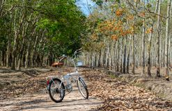 A bike parking at rubber forest royalty free stock photography
