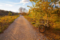 Bike at Parque de Turia of Valencia park sunset Royalty Free Stock Photography