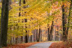 Bike path through autumn trees Royalty Free Stock Image