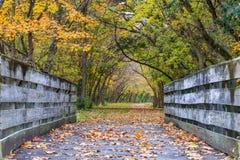 Bike Path Bridge in Autumn. A bike path bridge on the Little Miami Scenic River Trail richly adorned in the colors of autumn, Southwestern Ohio, USA Stock Photo