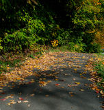 Bike Path in the Fall Royalty Free Stock Images