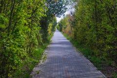 Bike path on Hel Peninsula. Bike lane on Hel Peninsula on the Baltic Sea in Poland Royalty Free Stock Image