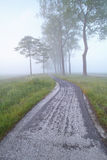 Bike path between trees in fog Royalty Free Stock Photography