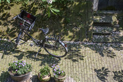 Bike on the pavement in the sunny day. With some plants in Europe Royalty Free Stock Photos