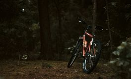 Bike rested on tree in forest royalty free stock photo