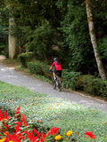 Bike rider. One man riding a bike on natural park Stock Photos