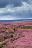 Bike riding in the English Countryside. Riding mountain bikes over remote English Countryside in the summer, Blanchland moors,Northumberland, North East England Royalty Free Stock Photo
