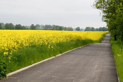Bike road near yellow rape field Royalty Free Stock Photography
