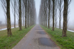 Bike road between tree rows in fog Stock Photography
