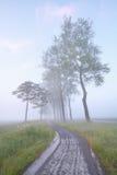 Bike road between trees in mist Stock Image