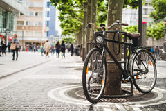 Bike standing near a platan tree in Frankfurt, Germany Royalty Free Stock Images