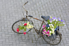 Bike and summer bedding flowers Stock Image