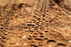 Bike tire tracks on muddy trail royalty. Tire tracks on wet muddy road, abstract background, texture material. Tyre track on dirt sand or mud, retro tone Royalty Free Stock Photo