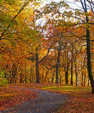 A bike trail along deciduous trees in autumn. Stock Photo