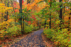 Bike trail in autumn time Royalty Free Stock Photo