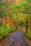 Bike trail through autumn trees Stock Photos