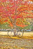 Bike and tree Royalty Free Stock Photography
