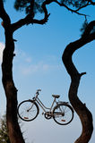Bike on the tree. Bike between trees on the sky Stock Image