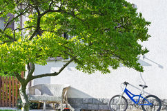 Bike and tree. Blue bicycle propped up in the garden near the tree Royalty Free Stock Images