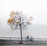 Bike under autumnn tree Stock Photography