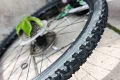 Bike wheel and plant. Royalty Free Stock Images