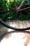 Bike Wheel and shadow. Royalty Free Stock Photography