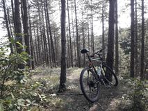 Bike in the wood royalty free stock photos