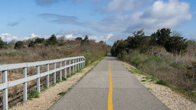 Bikepath attraverso il legno Immagine Stock