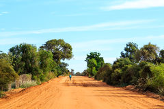 Biker on a desolate sand road in a baobab forest at Madagascar Stock Images
