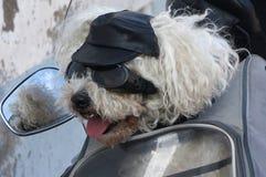 Biker Dog 2. Comical dog on a motor bike, wearing goggles and cap Stock Image
