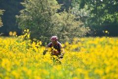 mountainbiker in field of flowers in belgium Stock Photos