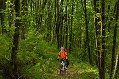 Biker on the forest road Royalty Free Stock Photography