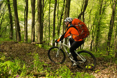 Biker on the forest road Royalty Free Stock Image