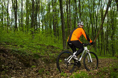 Biker on the forest road Stock Photography