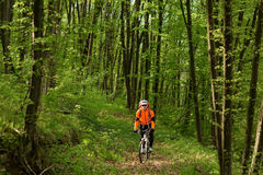 Biker on the forest road Stock Images