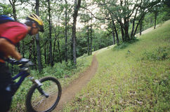 Biker Riding On Forest Trail Stock Photos