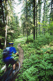Biker Riding On Forest Trail Royalty Free Stock Photos