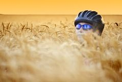 Biker in wheat Royalty Free Stock Photos