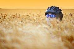 Biker in wheat royalty free stock photos
