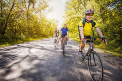 Bikers on a summer workout on a forest road Stock Photography