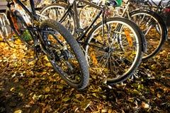 Bikes in autumn Stock Image