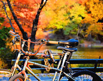 Bikes in Fall Royalty Free Stock Photography