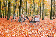 Bikes in the forest from the Netherlands Stock Photography