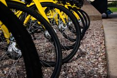 Bikes in a park waiting to be rented royalty free stock photo