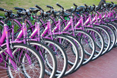 Bikes for rent. Group of pink bicycles in Florence close to railway station waiting to be rent Royalty Free Stock Image
