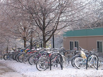 Bikes in Snow. Bikes at the University of Michigan, covered in snow Stock Images