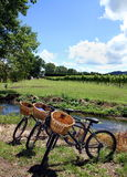 Bikes in a vineyard Stock Image