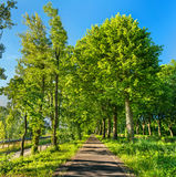 Bikeway along the Rhone - Rhine Canal in Alsace, France Royalty Free Stock Photography