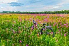 Biking μεταξύ των wildflowers στο δασικό χορτοτάπητα Στοκ Εικόνα